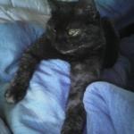 Katze Nele ;D